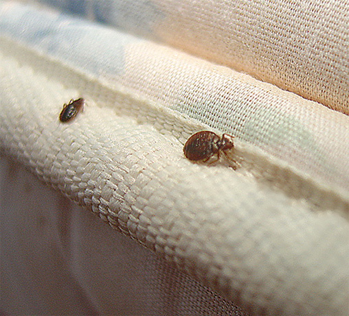 Photo of Don't Let the Bed Bugs Bite: Busting Bed Bugs and Keeping Your Family Bite-Free